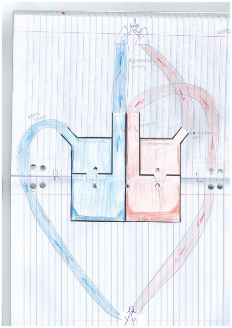 Box And Heart Diagram